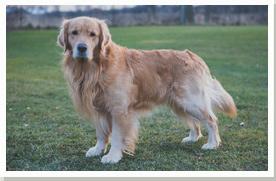 Dog Kennels Pontypool